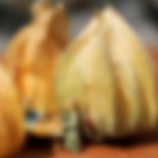 Les contes zen du potager flou